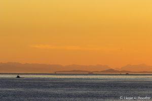 Oest de Canadà, juliol 2015 – Dia 17: El dia de les balenes geperudes.