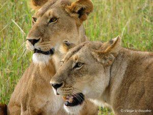 10 postals d'un safari a Kenya