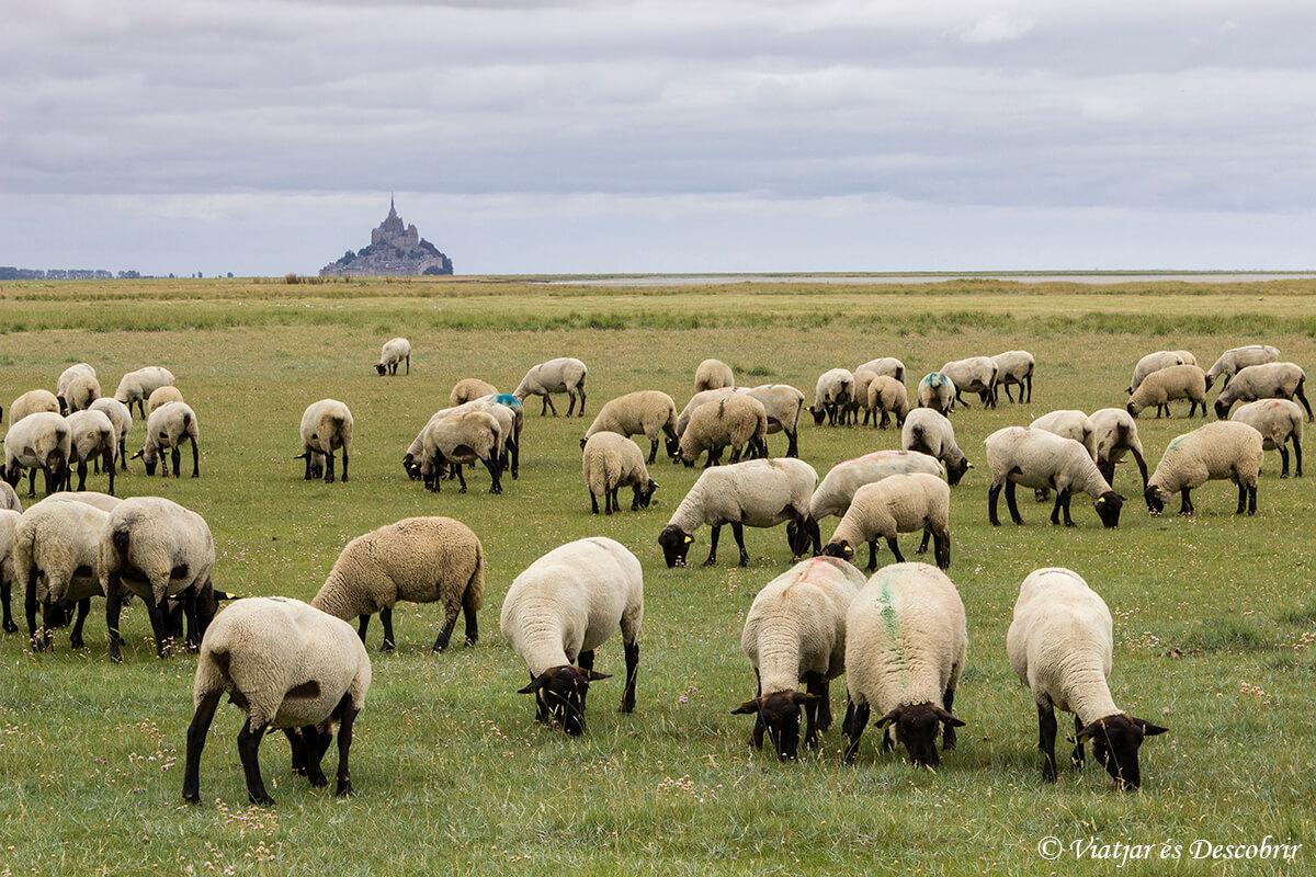 Què veure a la Bretanya Francesa: 10 raons per visitar aquesta regió