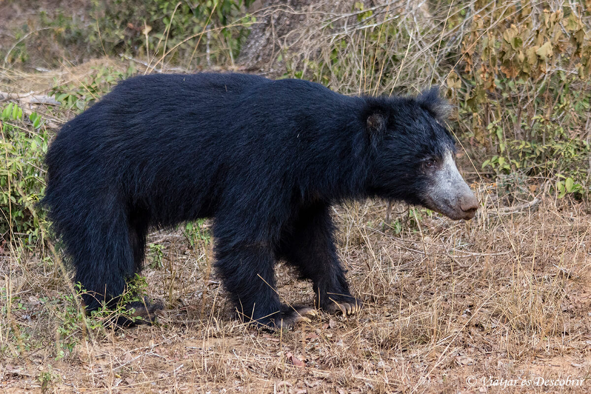 fauna de sri lanka al wilpattu national park