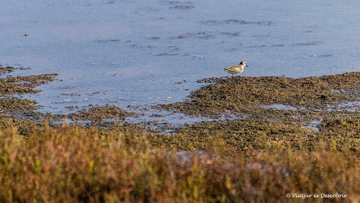 Observar ocells és ideal al Delta