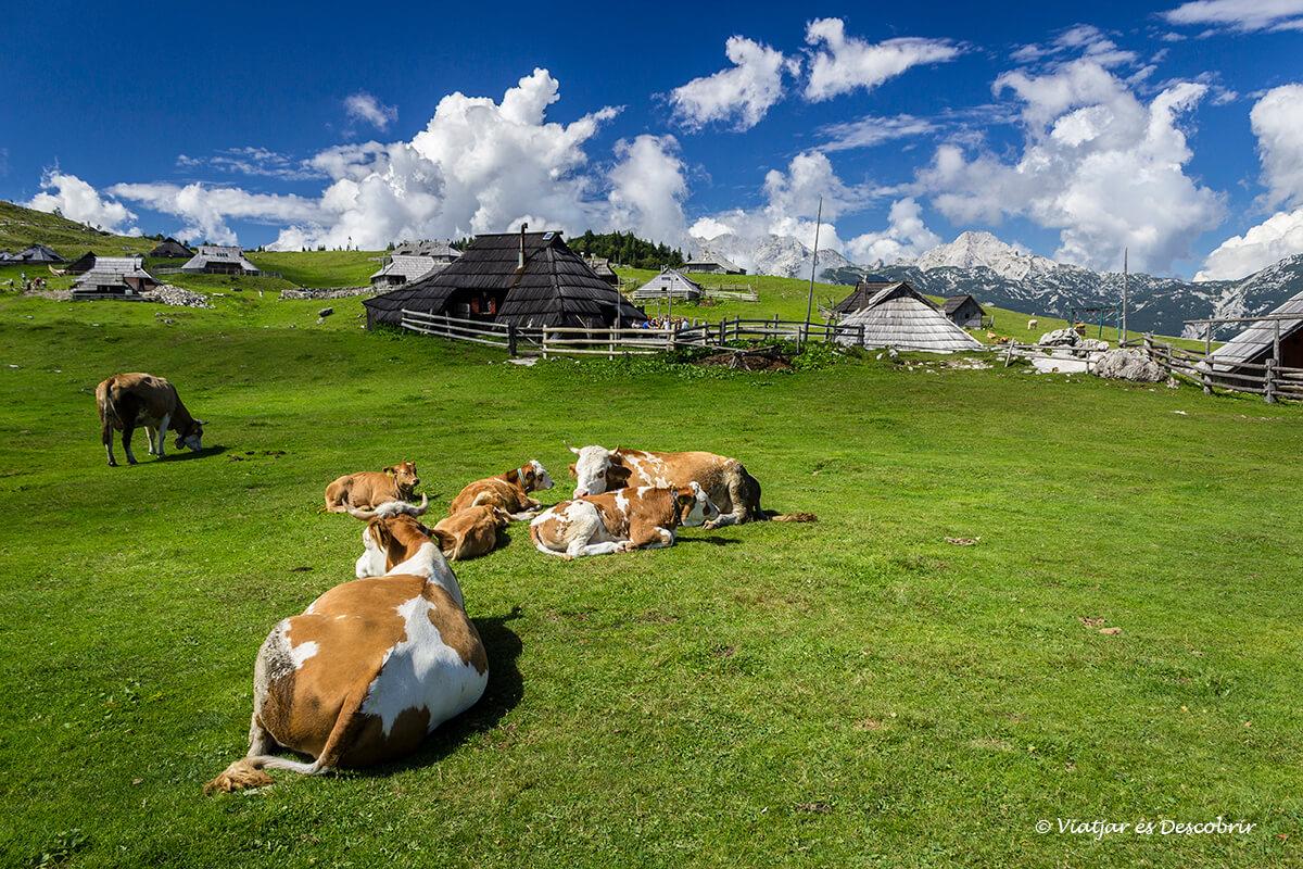 Velika Planina, els prats alpins més famosos d'Eslovènia