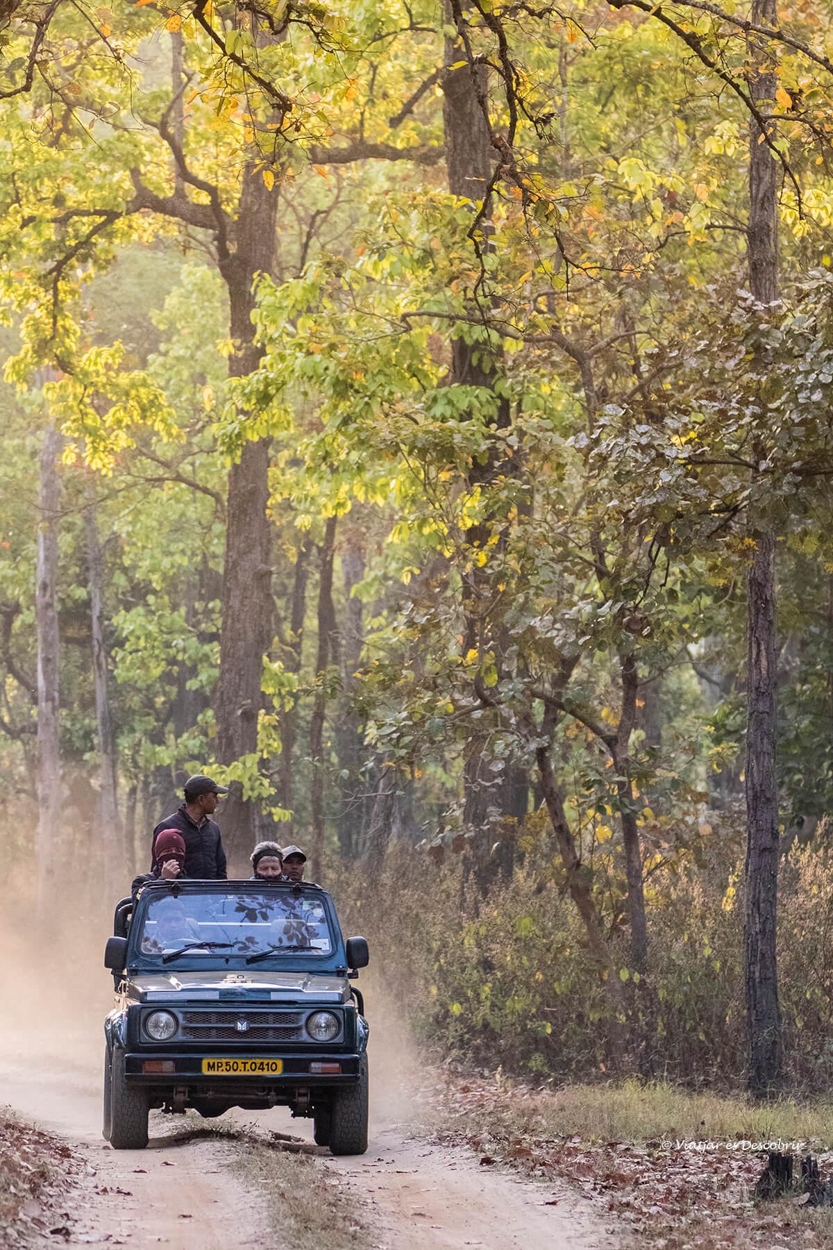 els safaris a l'india ofereixen moltes possibilitats de veure fauna