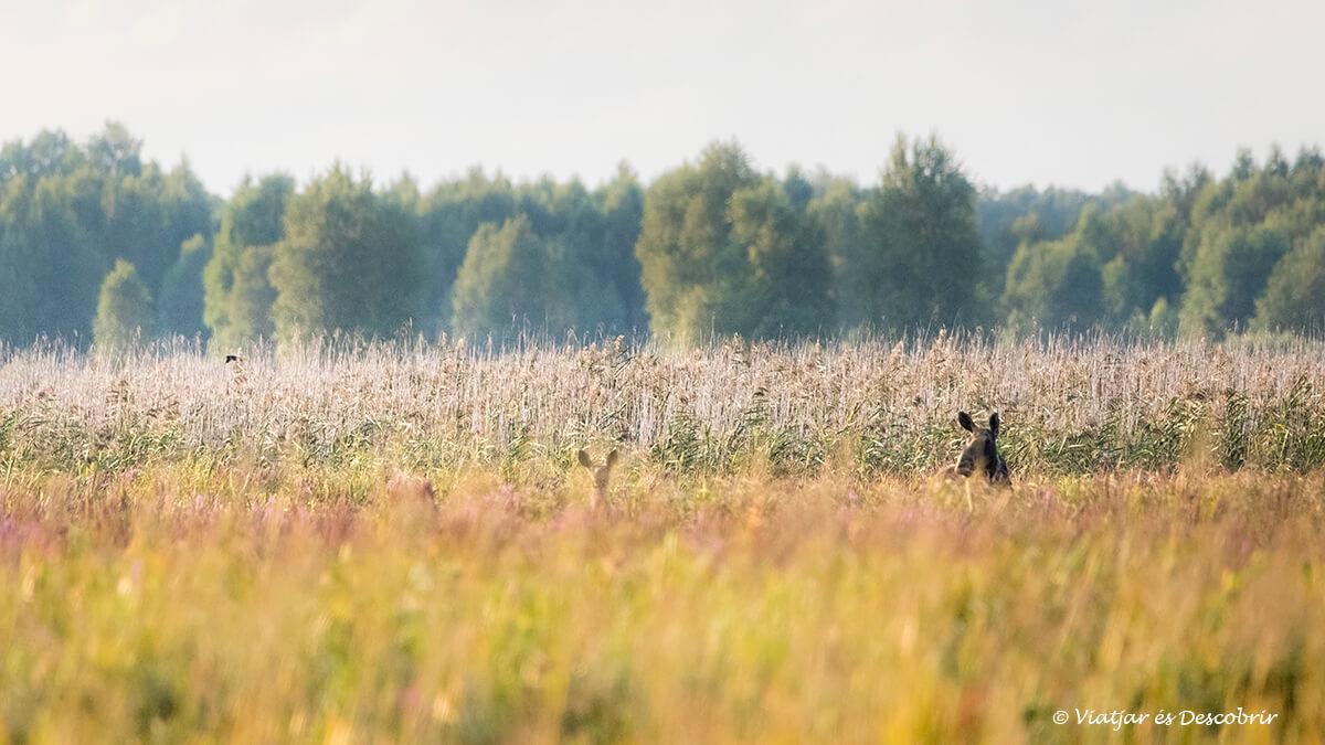 ants a bierbza al nord de polonia