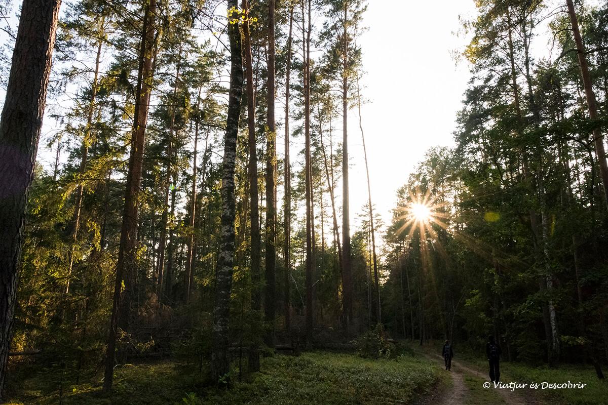 boscos del parc nacional bialowieza