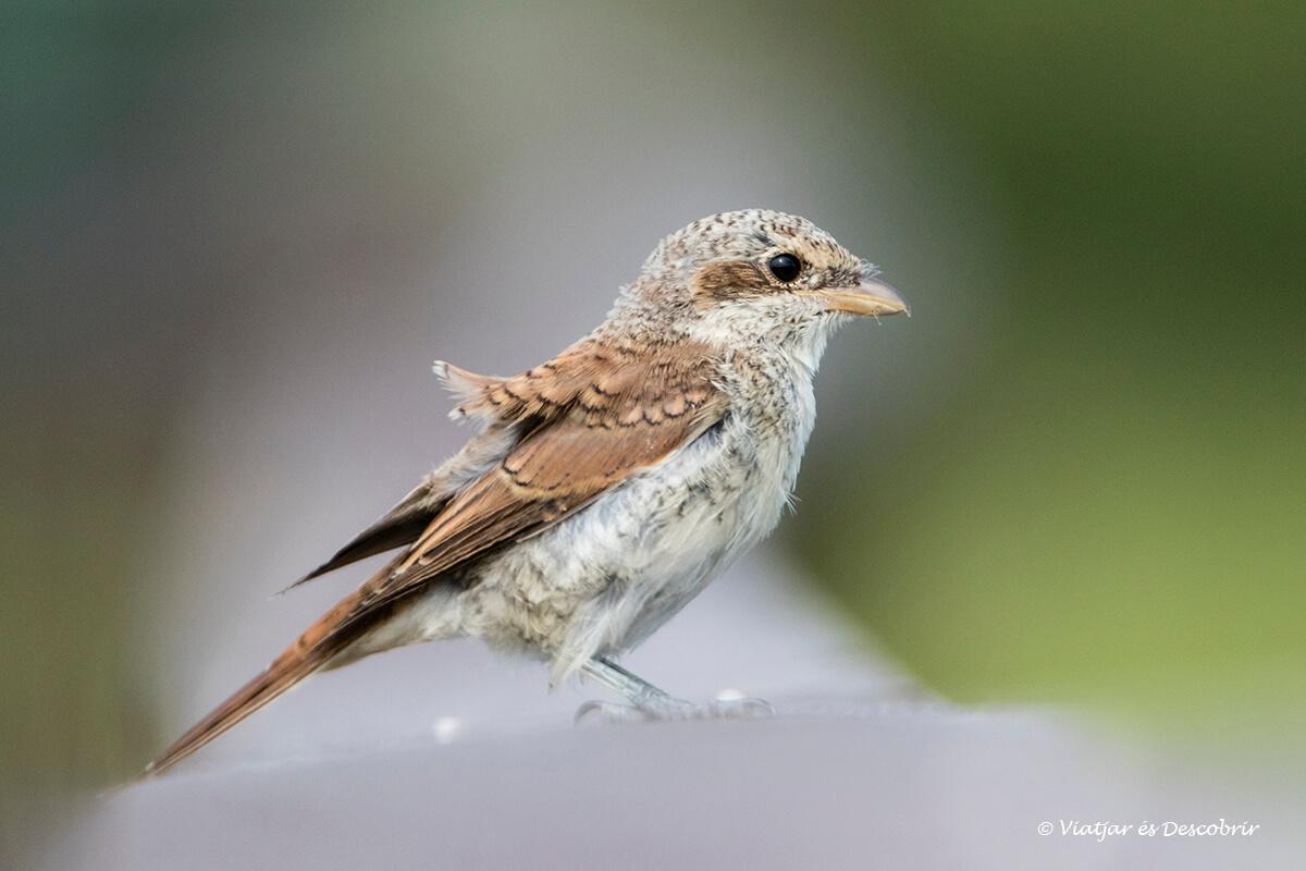 ocell al parc nacional narew