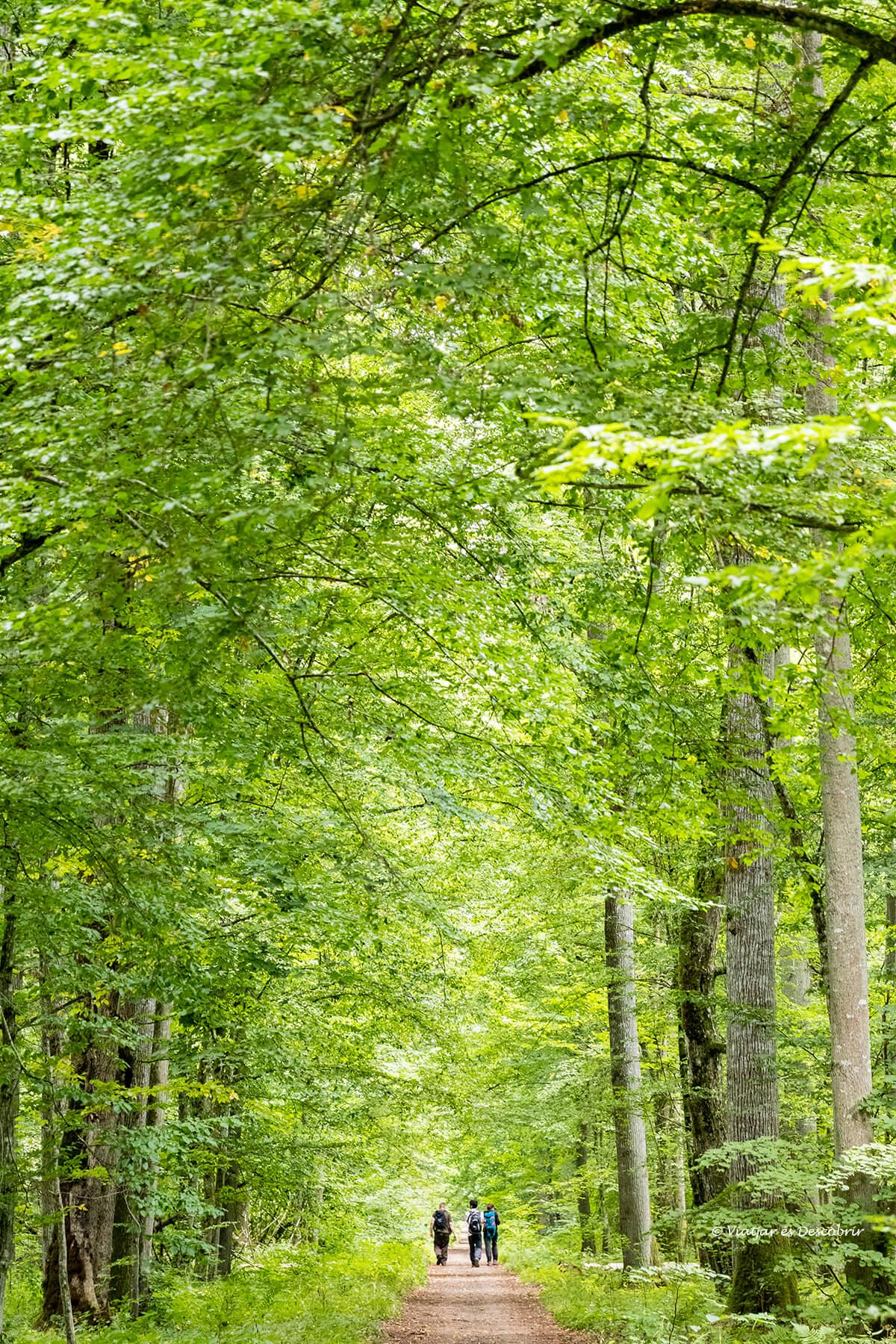 caminant pel bosc restringit de polonia