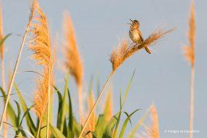 10 Consells per fotografiar animals salvatges