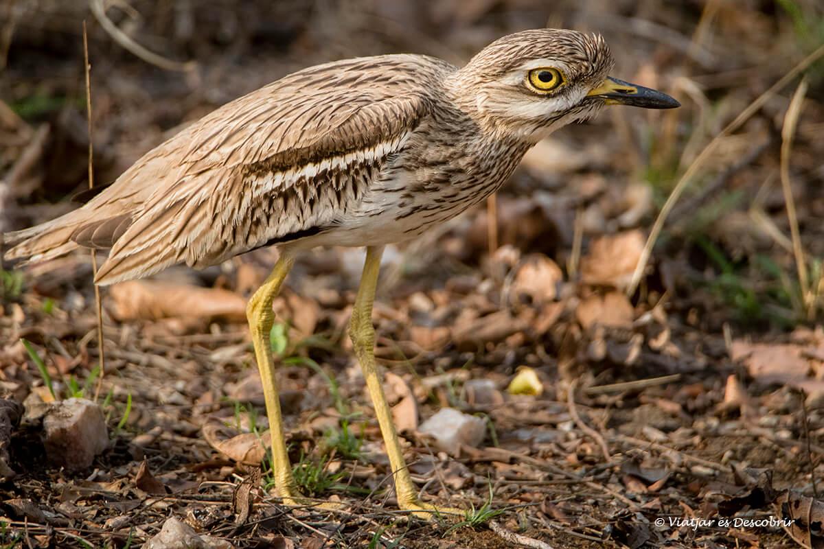 ocell fotografiar durant el safari