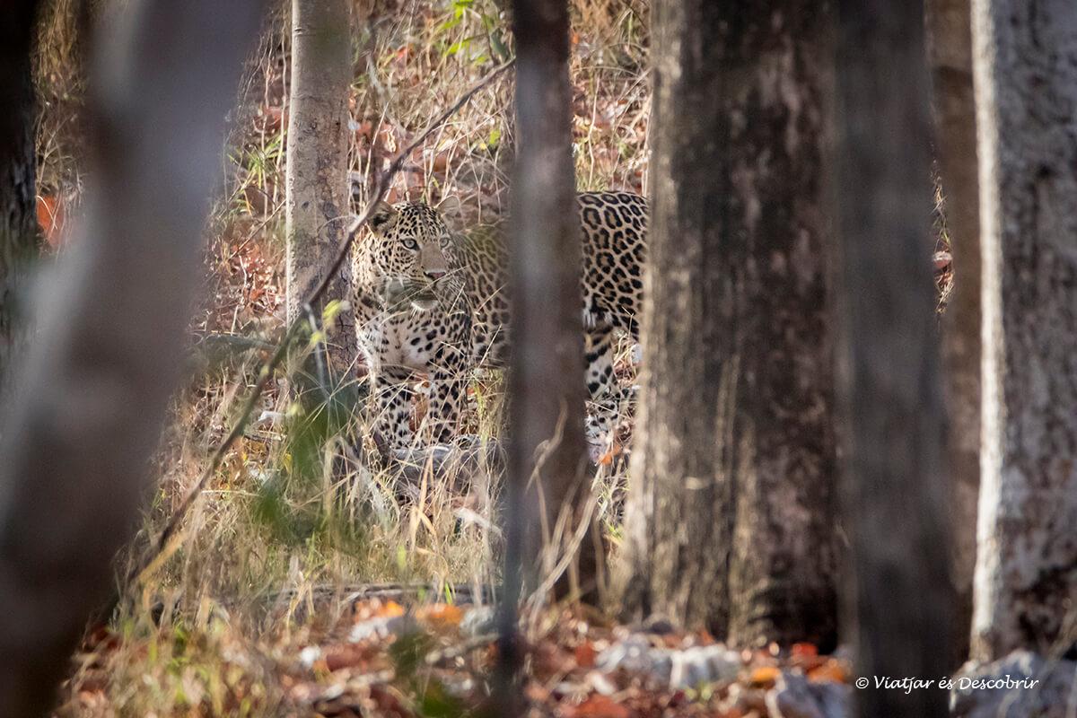 Guia per fer un safari al Parc Nacional Pench