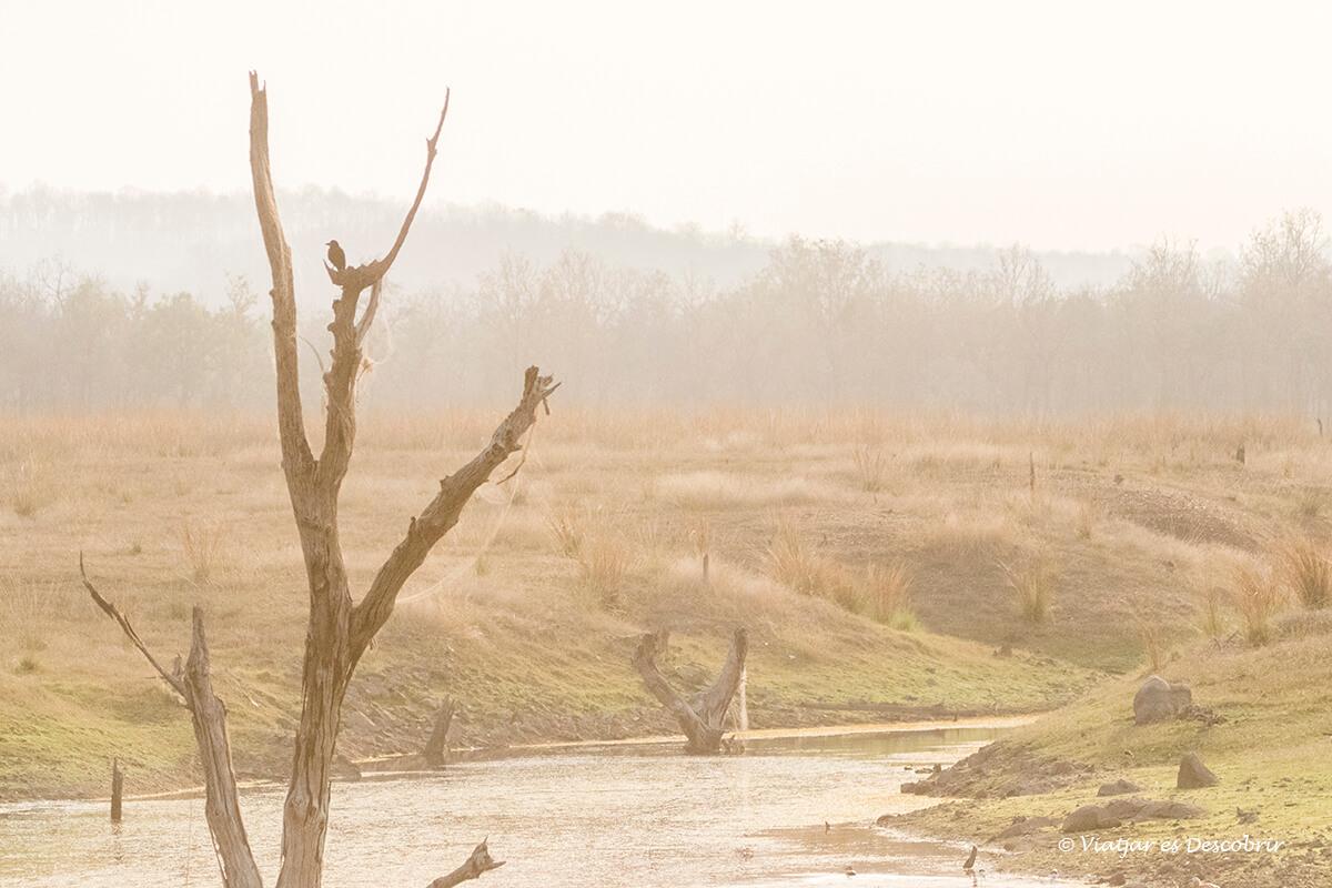 safari al parc nacional pench paisatge