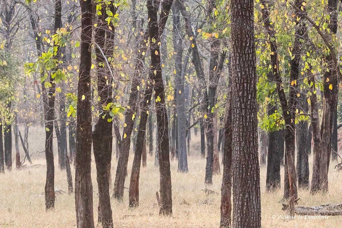 paisatge jungla parc nacional pench