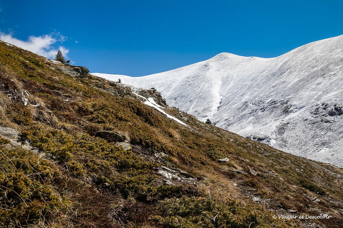excursions des de la vall de nuria al torraneules
