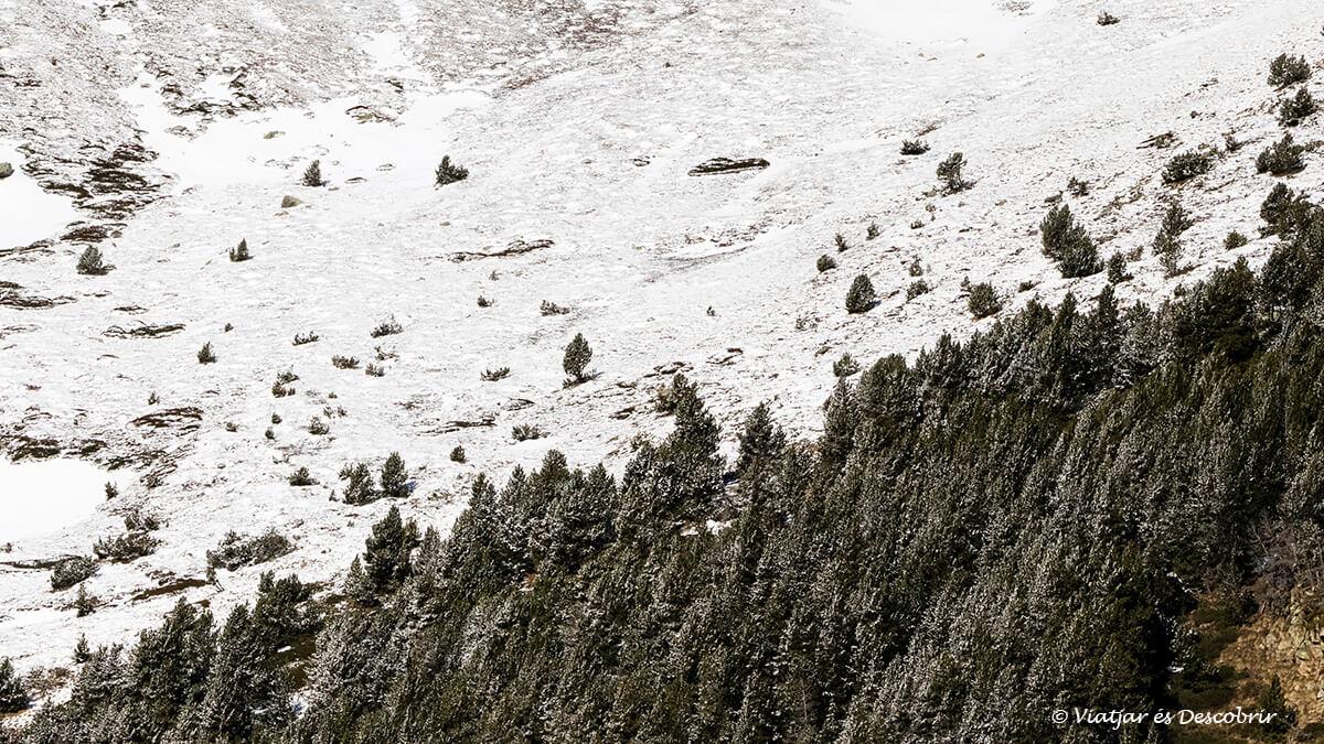 bosc nevat a la vall de nuria