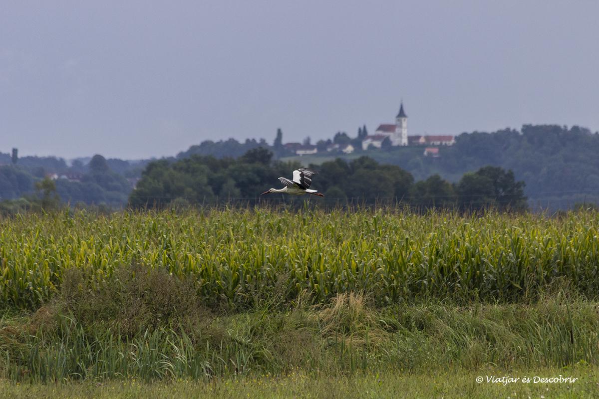 cigonya volant a la regio rural de maribor
