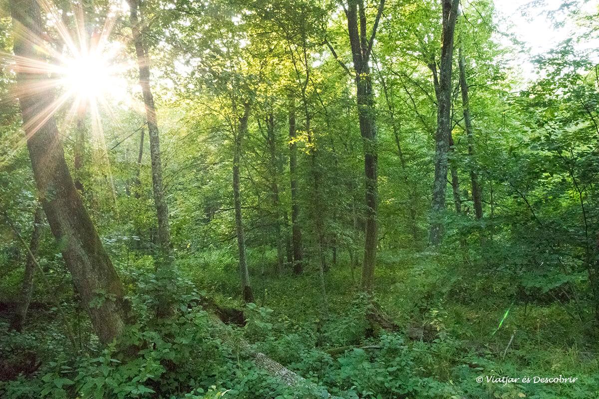 detalls dels boscos de polonia