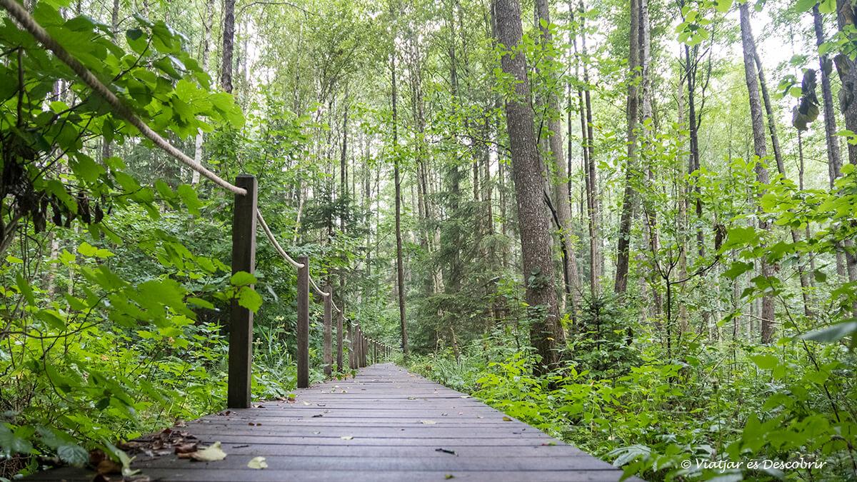 exursio famosa als boscos de bialowieza