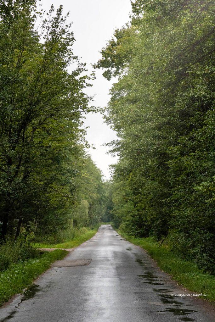 carretera del parc nacional bialowieza i els seus bisons