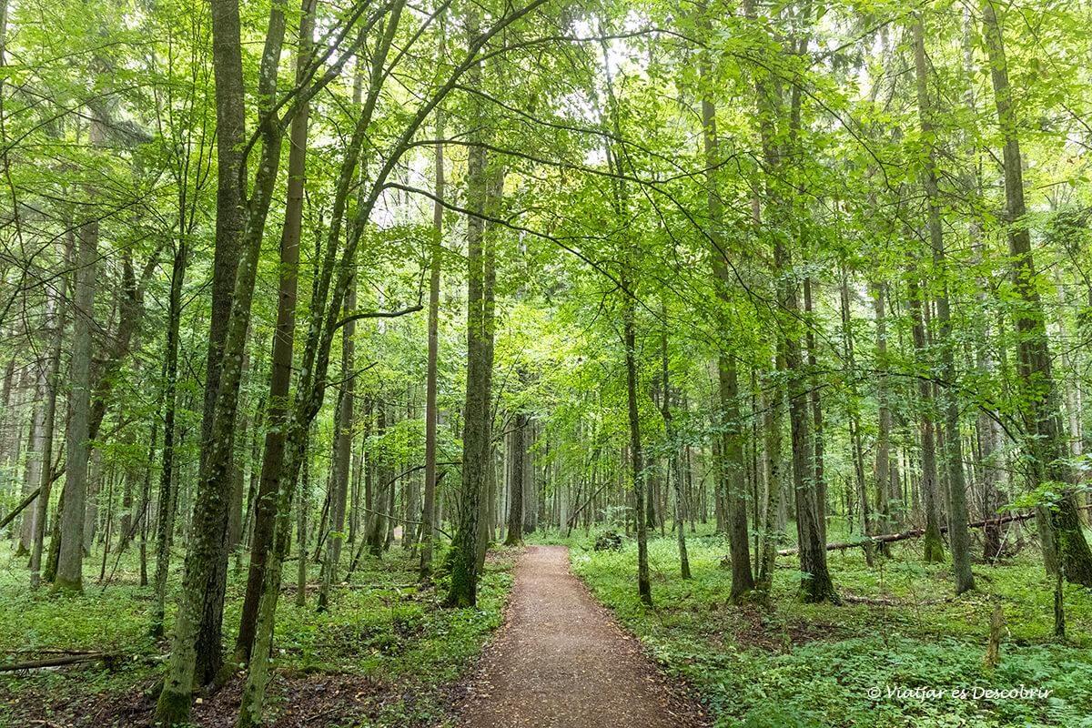 excurions pels boscos de bialowieza