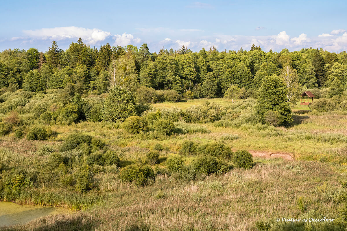 vista panoramica del nord de bialowieza durant una excurcio