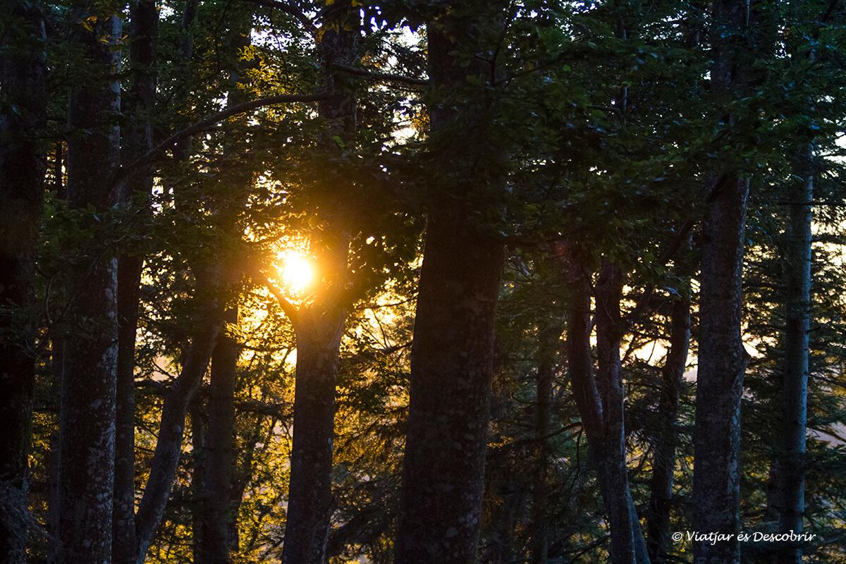 posta de sol a l'interior del bosc a Eslovènia al territori de l'ós bru