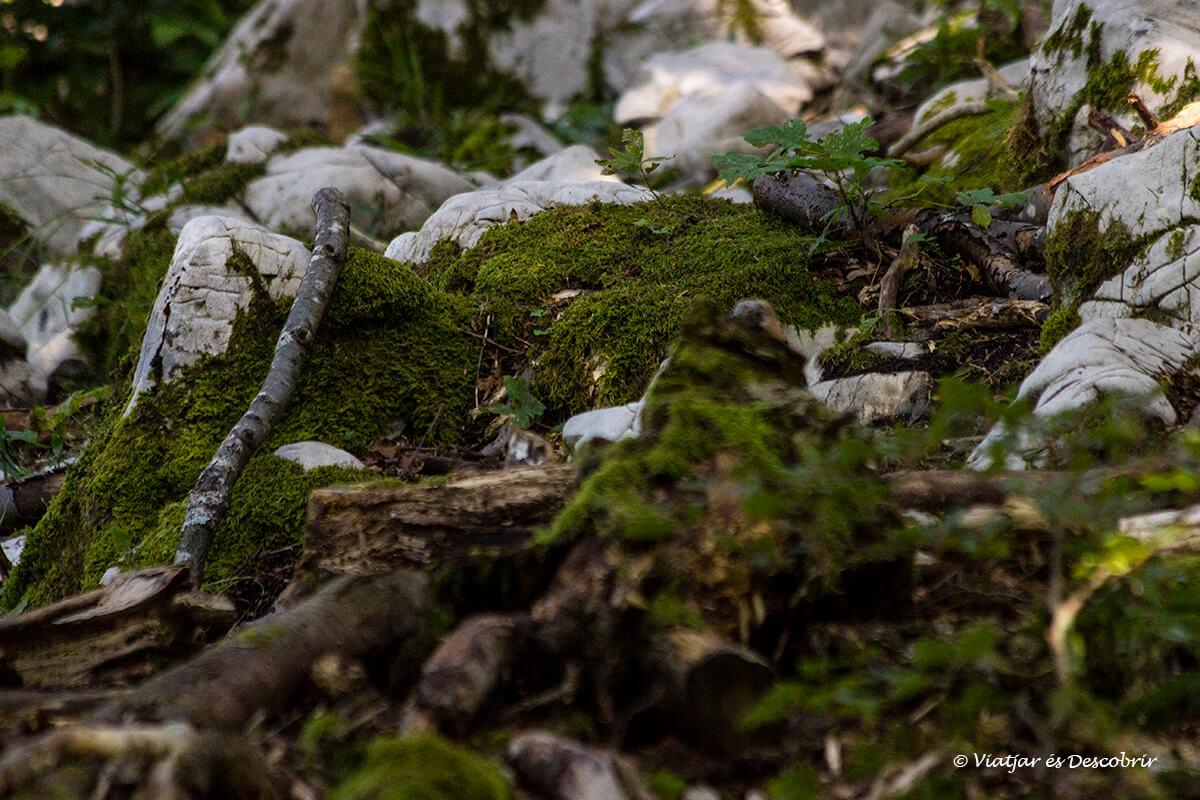 detalls del bosc durant l'espera per veure ossos a Eslovènia