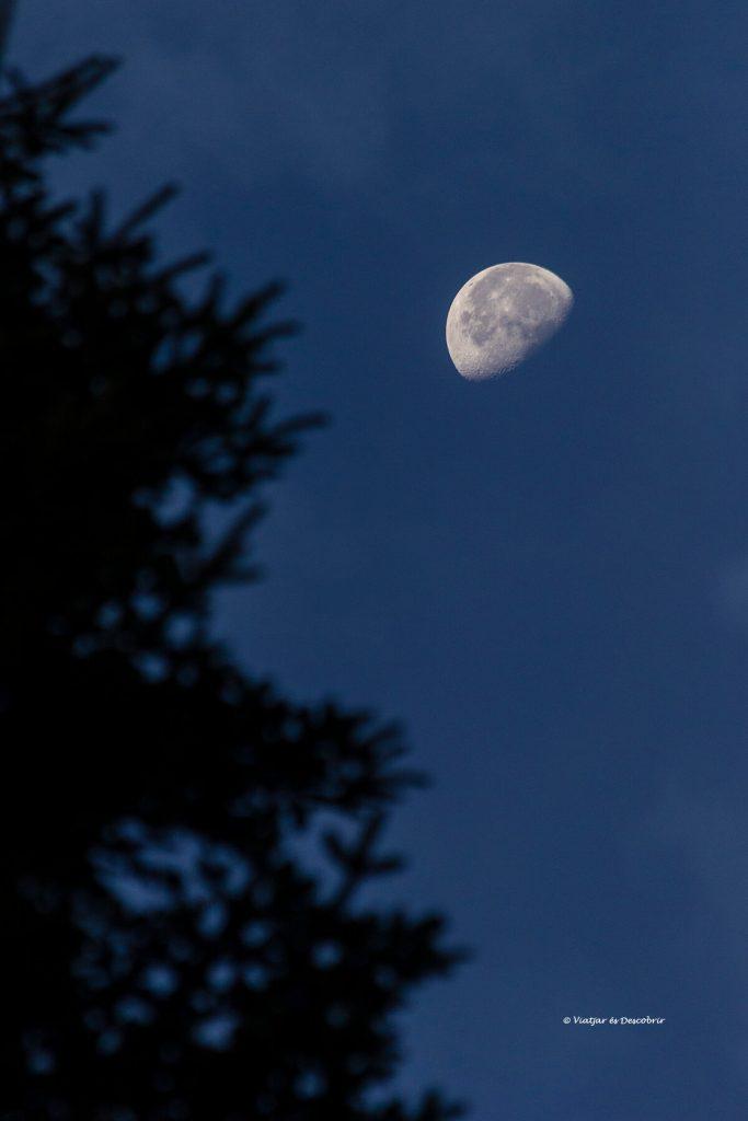 foscor i la lluna entre els arbres dels boscos amb óssos bruns a Eslovènia