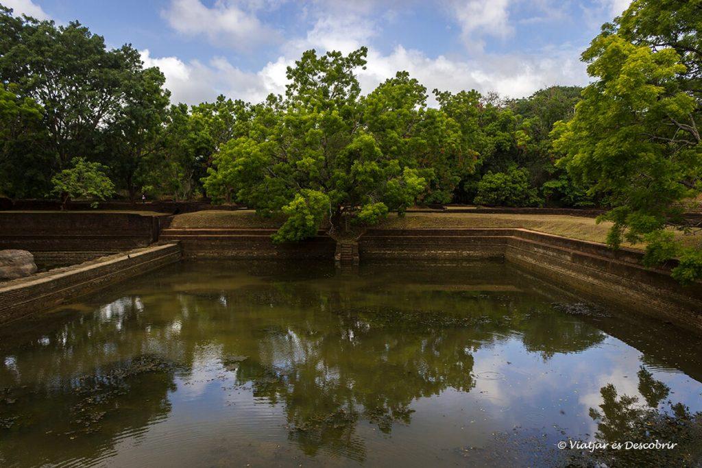 naturalesa i pous d'aigua als jardins de la roca de sigiriya a sri lanka