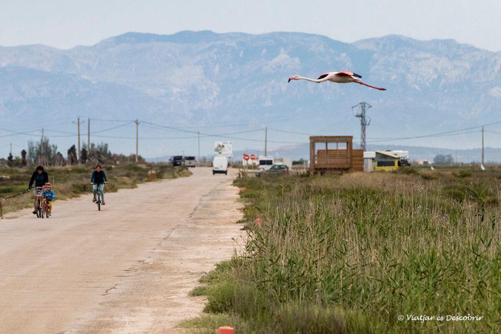 ciclistes i flamencs al delta de l'ebre