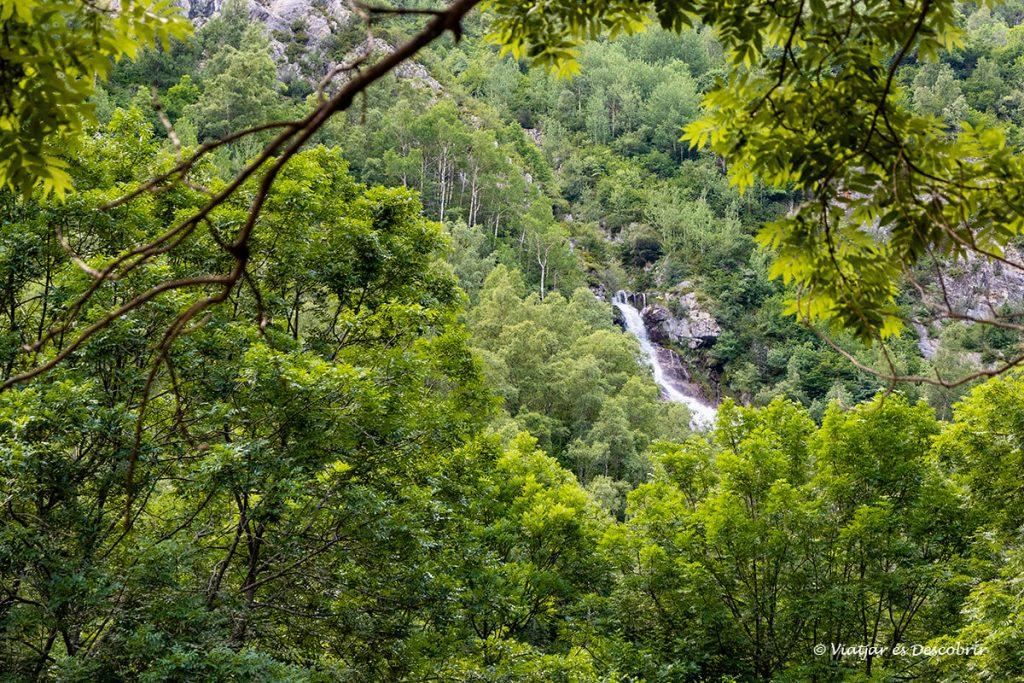 cascada espigantosa entre el bosc